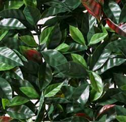 tepes-cesped-natural-barcelona-horticola